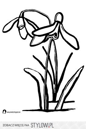 Pomeduk Wiosenne Kwiaty śnieżyczka Przebiśnieg Kol Na Stylowipl