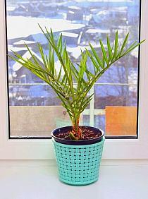 Ogrodowo Rośliny W Domu Na Stylowipl