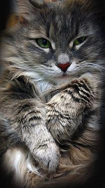 Kot Ashera Na Stylowipl