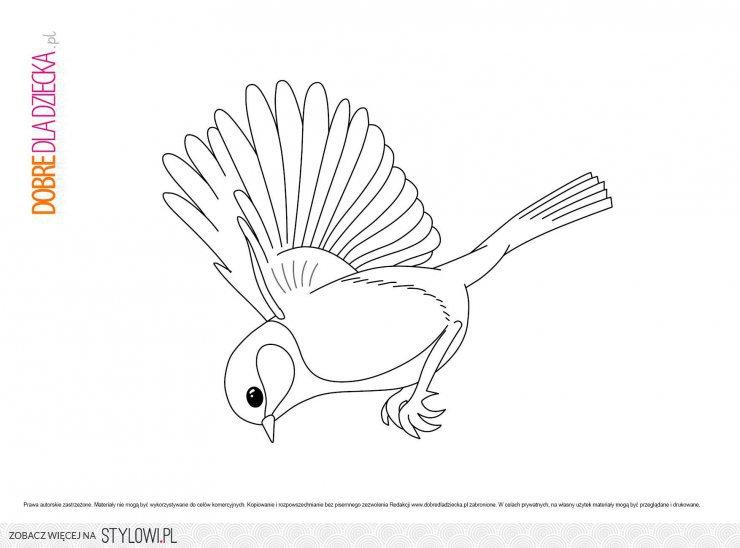 Ptaki Kolorowanki Szukaj W Google Na Stylowi Pl