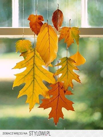 Suszone liście, wiszące na oknie.