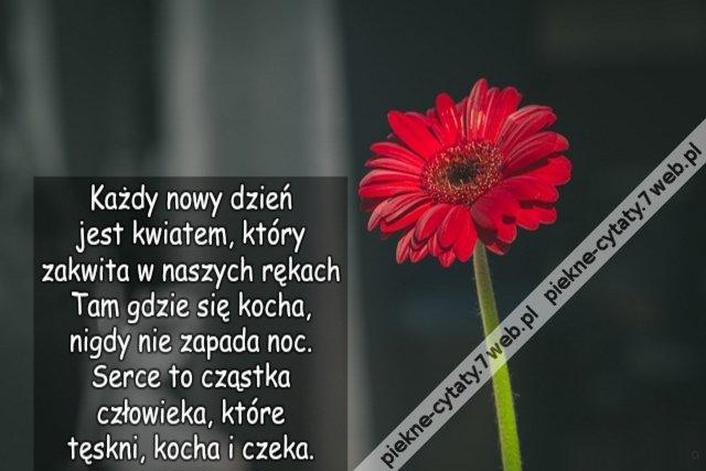 Każdy Nowy Dzień Jest Kwiatem Który Zakwita W Naszych Na