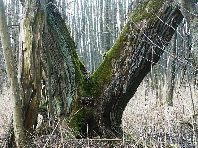 Drzewa Umierają Stojąc Wiersz Napisany Przez Marek Ry Na
